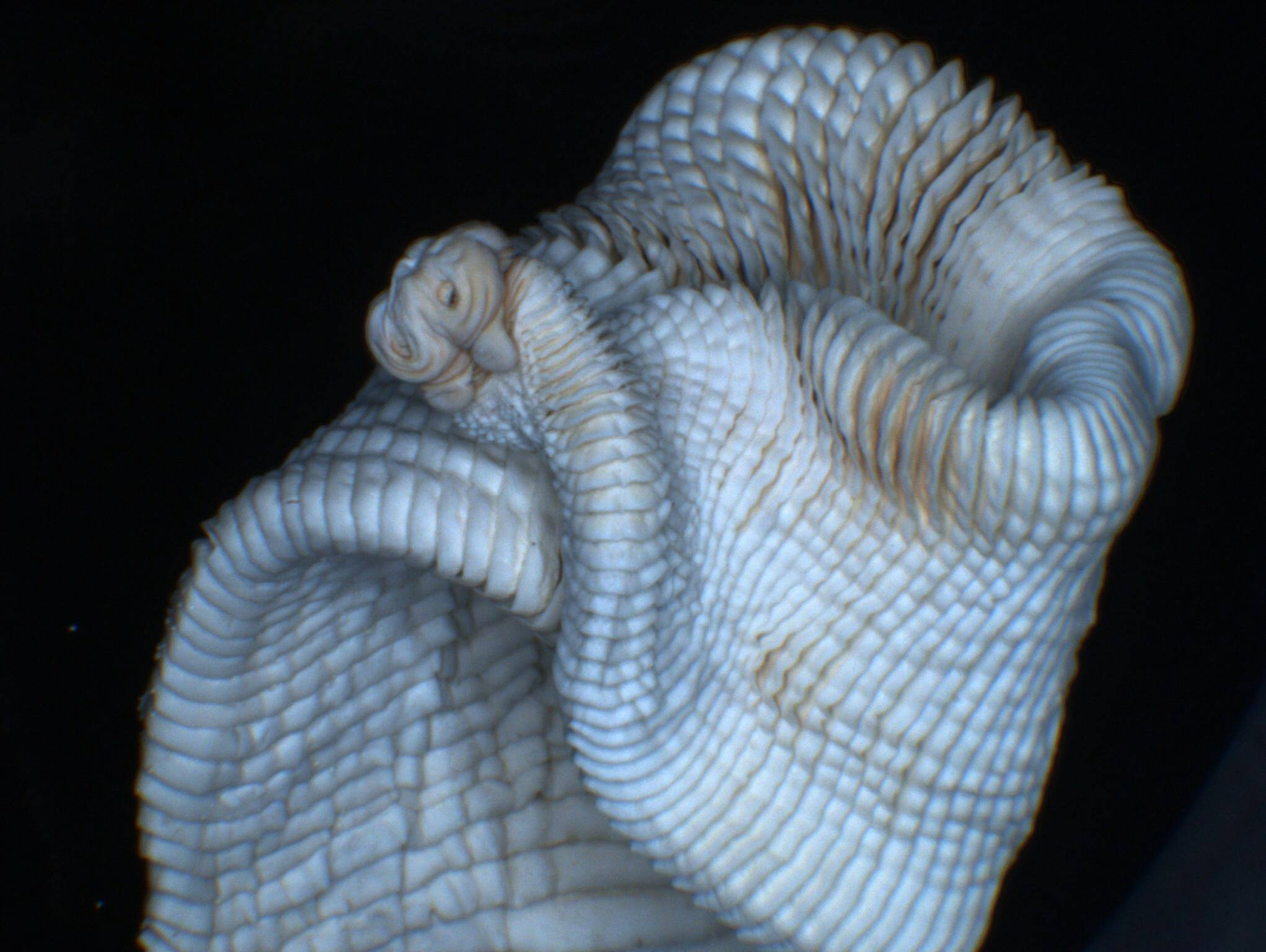 lintworm ontlasting