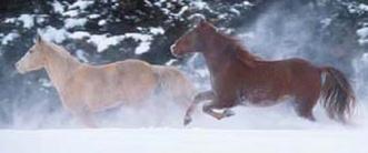 Wormresistentie bij alle paarden
