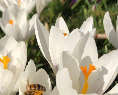 Voorjaar in het land!