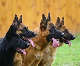 Onderzoek van de ontlasting voor alle honden