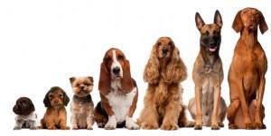 Wormbestrijding bij de hond voor alle maten