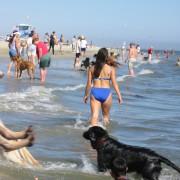 Het wormenrisico voor de vakantie hond