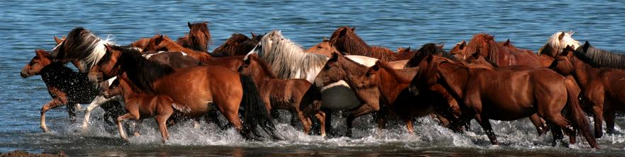 wormbestrijding bij paarden